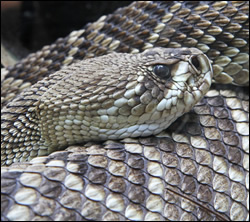 snake removal Highland Park